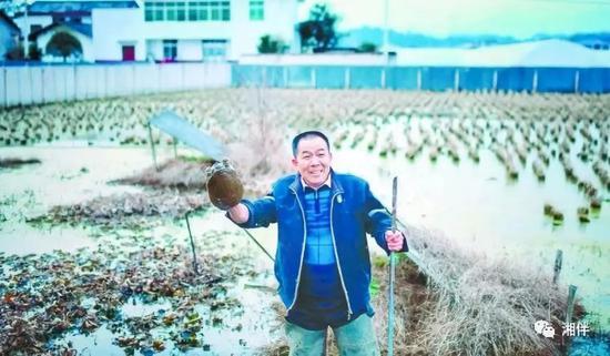 孔蒲中在水田里捕捉甲鱼。湖南日报记者 童迪 摄