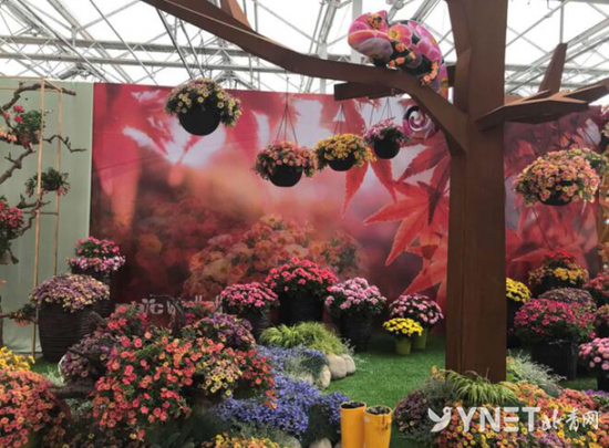 第六届北京花木春季花展开幕