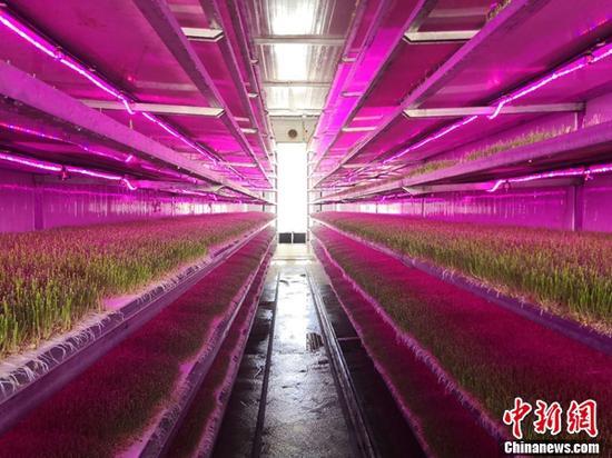 图为昌都经开区一家现代新型牧草种植企业。吉翔 摄