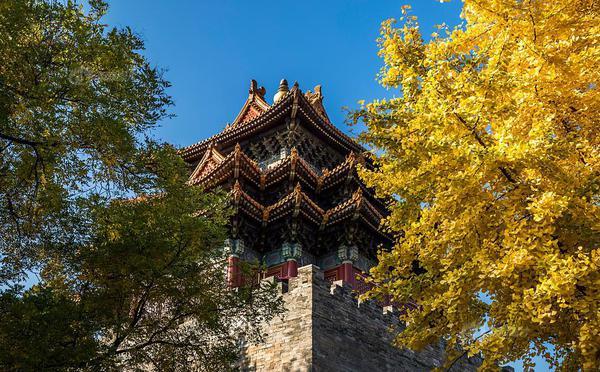 故宫古建筑与银杏黄叶交相呼应