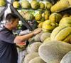 新疆:瓜果飘香