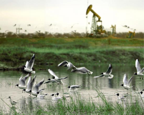 """打造""""绿色油田"""",实现人与自然的和谐"""