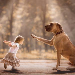 小小孩和大狗狗的互动萌化你的心