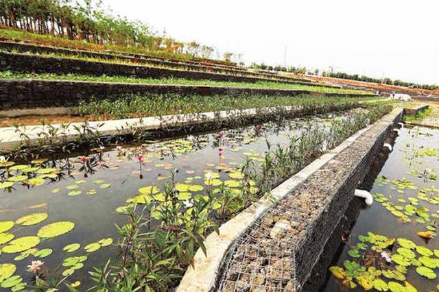 海口凤翔公园施工接近收尾 已向市民初步开放