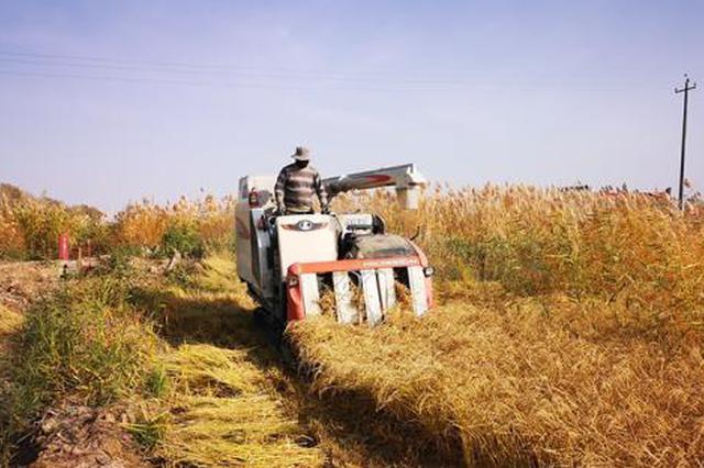 """""""订单式""""蔬菜种植 助力农民脱贫致富"""