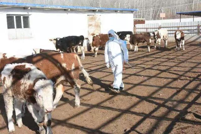 养殖合作社带动贫困群众增收