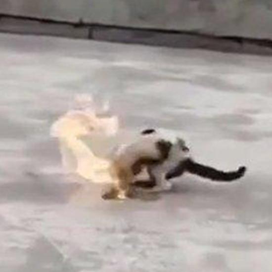 大学生拍虐猫视频贩卖 山东理工大学:予以退学