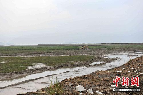 资料图:村民非法围填海。中新社发 吕巧琴 摄
