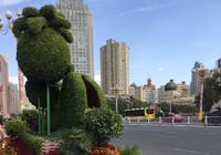 街头增加花堆造型扮靓首府