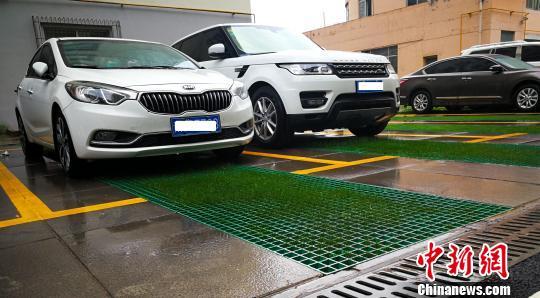 图为经过海绵化改造的停车位。 张添福 摄