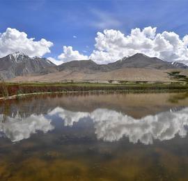 西藏阿里景如画 藏野驴出没牧场