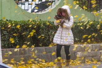 北京迎大风降温 风吹落叶满地金黄