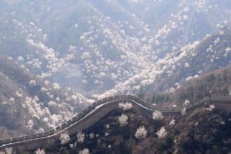北京八达岭长城春意浓