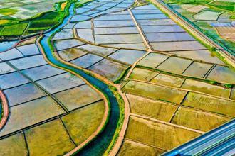 祁連山下的水稻美景