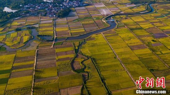 河流蜿蜒,穿过稻田。