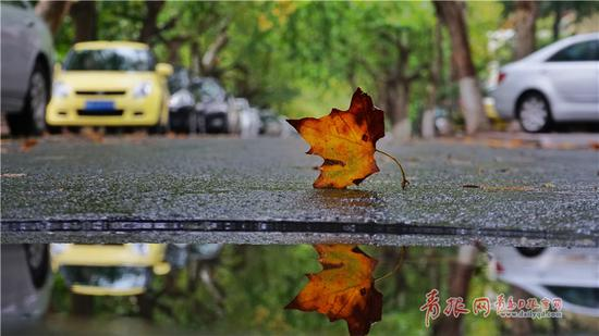 雨后到八大关走走,在这里每一处都弥漫着多彩的浪漫。