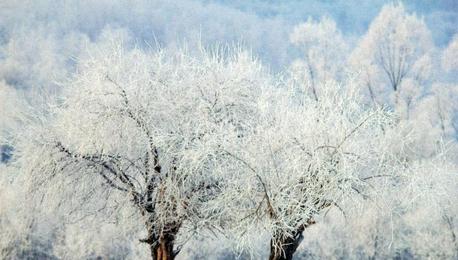 内蒙古额尔古纳迎来今年首场雾凇景观