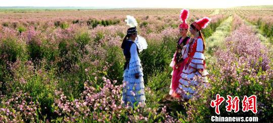 """美丽的哈萨克族姑娘在花海中""""嬉戏""""。 巴合提别克 摄"""