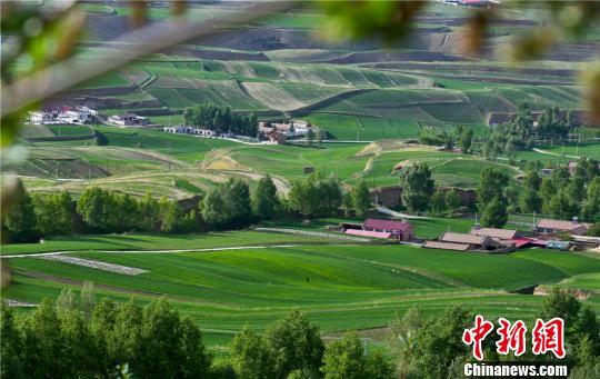 图为盛夏六月,祁连山北麓的甘肃民乐县。 王将 摄