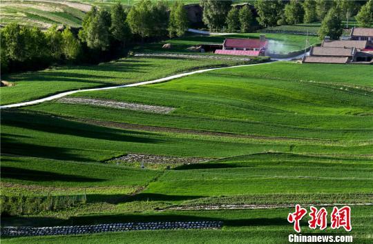 """6月10日,位于祁连山北麓的甘肃民乐县乡村美如""""巨幅绿毯""""。 王将 摄"""