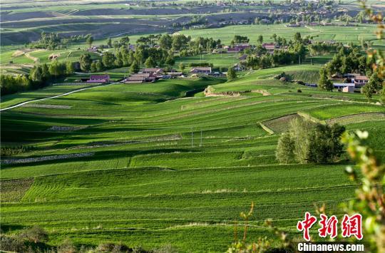 生机勃勃的美景构成了美丽乡村的田园风光。 王将 摄