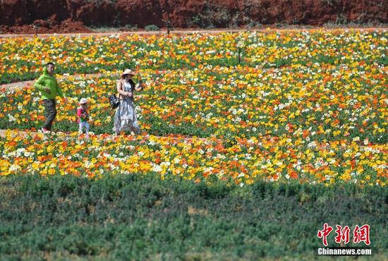 游客徜徉花丛
