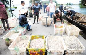 渔民捕捞的鱼虾在沙堤村码头统一称重。