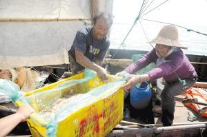 开湖第二阶段,渔民们主要捕捞滇池虾和银鱼。