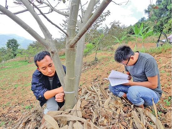 正文    云南省的贫困人口大多分布在山区,半山区,林地林木等森林资源