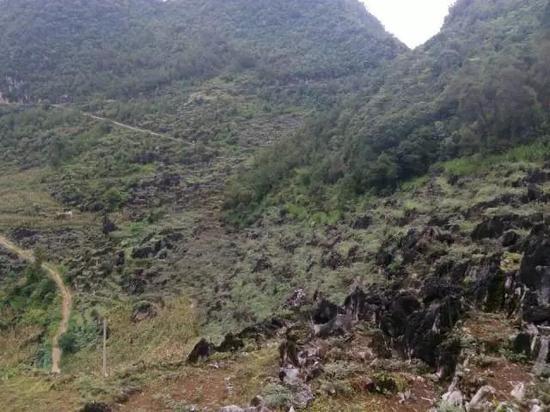 黄明金在故乡应用荒坡开展栽种业