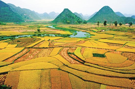 粮食总产量实现15连增 八宝米种植规模达14.67万亩