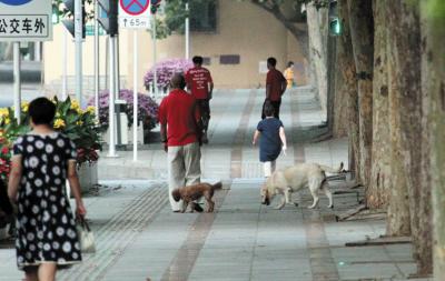 一些宠物犬并没有拴着牵引绳。