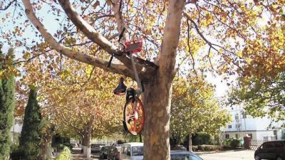 车子被挂在树上。