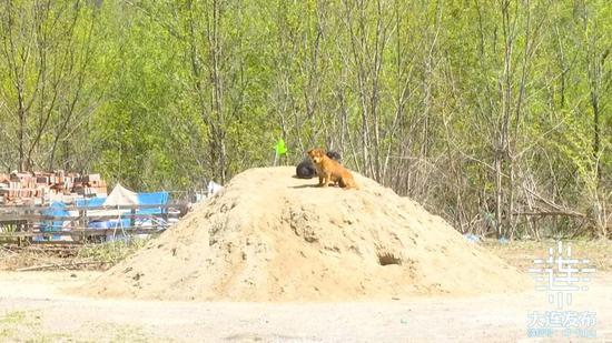 大连警方持续开展流浪犬清理收容行动