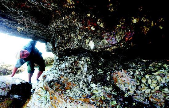 王英利在海边寻找合适的石头。