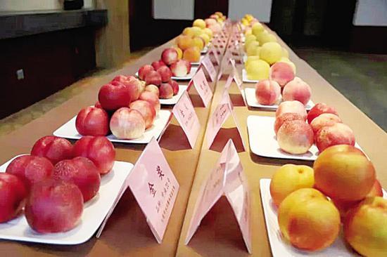 """""""蟠桃会""""上,瓦房店市5个品种桃获得金奖。"""