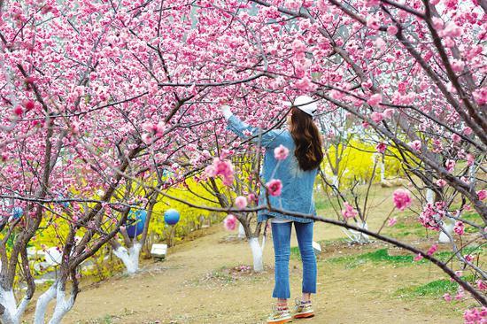 4月4日起旅顺樱花园(原二�三樱花园)正式开门纳客