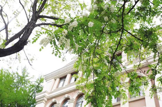 大连城市绿化大动作 新建一条槐