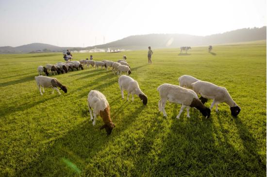 文化时光嘉年华开启2020三寰牧场夏季夜场