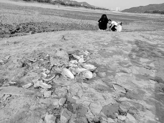 河床上随处可见掰开后剩下的河蚌外壳。