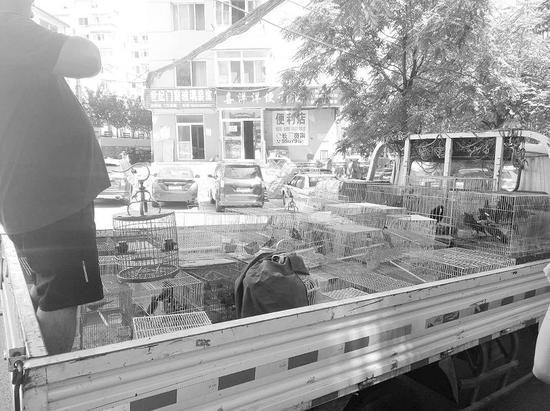从藏鸟窝点查获的鸟笼装了一卡车。