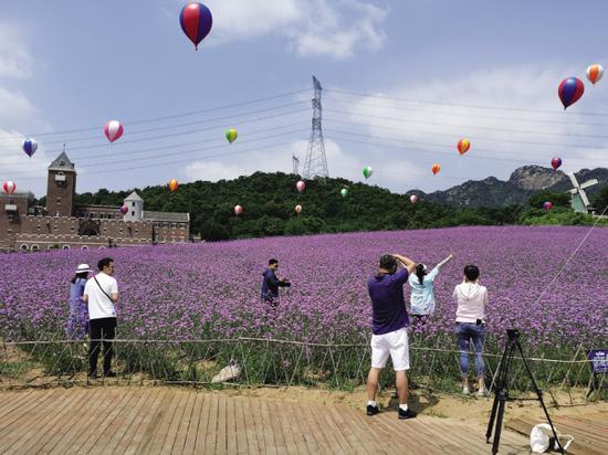 坐热气球俯瞰千亩紫色花田,爽!