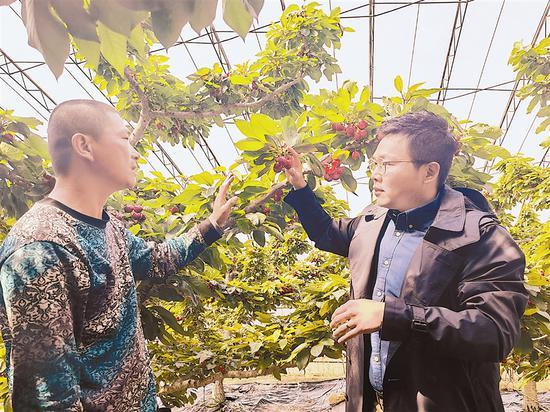 海外消费者3天内就能吃到大连大樱桃