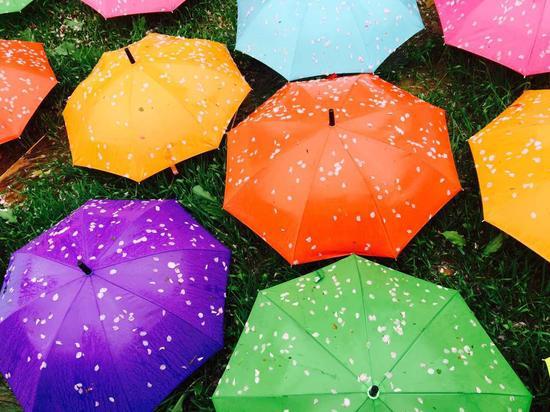 大连:雨后落樱别样美