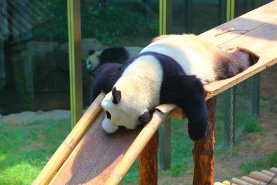 新浪旅游配图:大连森林动物园(2) 摄影:图片来自旅游攻略