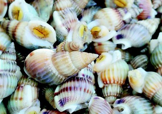 近日,网上有消息流传称,织纹螺,仅指甲盖大小,但误食可能引起头晕呕吐,甚至死亡!潜伏期最短5分钟,尚无特效治疗药物!大连人喜食海鲜,尤其对波螺这种小海鲜情有独钟,而春季正是吃波螺的时候,网上所传织纹螺有毒的消息不免让人担心,这美味到底还能不能吃了?对此,记者走访市场,并采访了大连市水产研究所的专家,了解到咱大连也有织纹螺,当下市场有售,由于南北水质有别,大连本地的波螺基本没有毒素,食用没什么问题。   食用织纹螺会致死?吃货担心   近日,一则织纹螺有毒食用可致命的消息让吃货们坐不住了。央视新