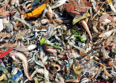 一筐渔货,里面垃圾真不少。