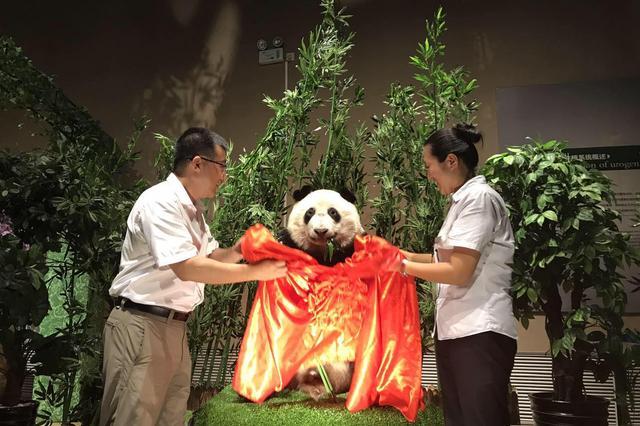 首个国宝大熊猫塑化标本走进金石滩生命奥秘博物馆