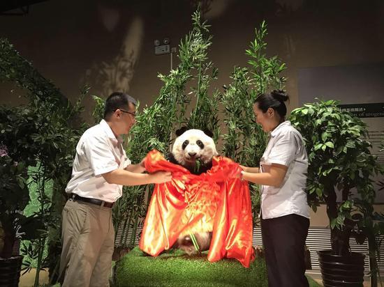 大连市金石滩博物馆迎来全球首只塑化熊猫标本