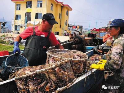 沉寂了四个多月的渔港变得繁忙起来。